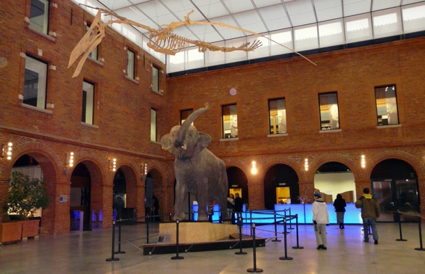 museum-toulouse